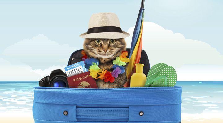 voyage à l'étranger avec un chat