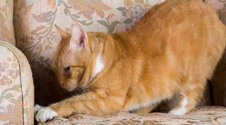 griffade de chat
