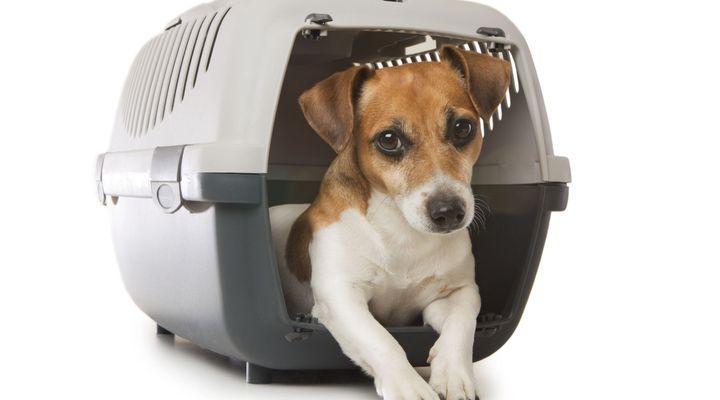 Accessoires de transport pour les chiens