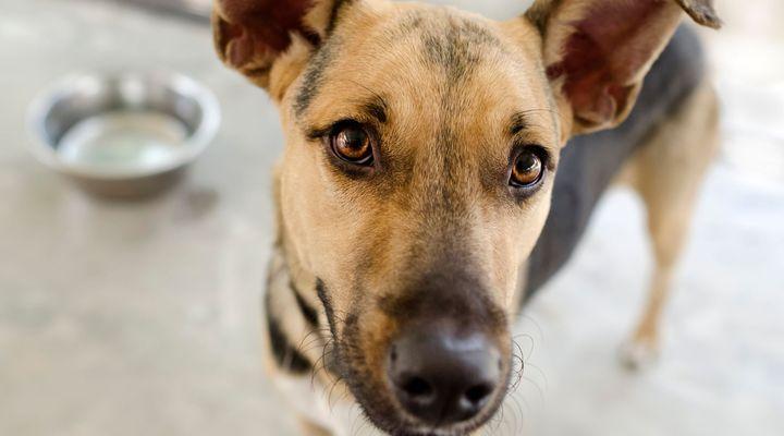 Portion et fréquence des repas du chien