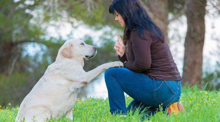 Dressage Pour Chien - 10 astuces à connaître - Education du chien - Tutorial