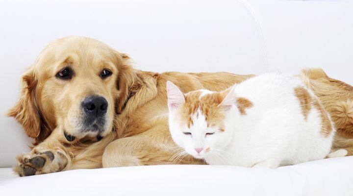 cohabitation chien chat