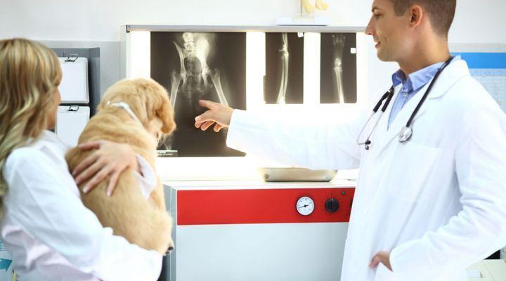 Examen d'imagerie pour le chien
