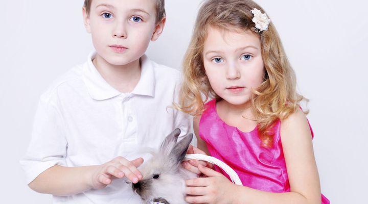 Calculs urinaires chez le lapin et le cobaye