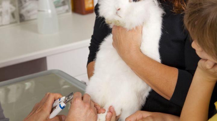 soins du lapin