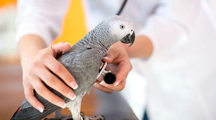 problèmes respiratoires chez l'oiseau