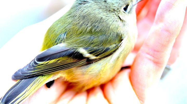 fractures chez l'oiseau