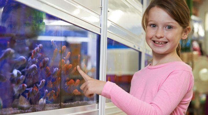 aquarium règles de base