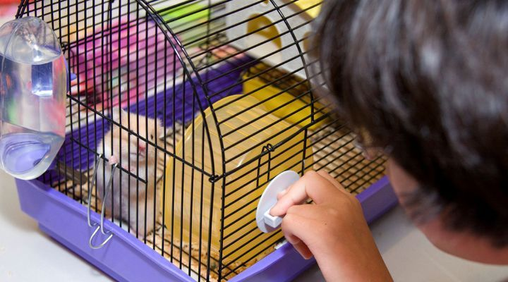 Accueillir un hamster
