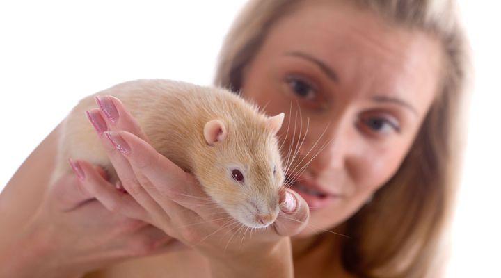 choisir son rat domestique
