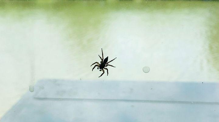 Piqûre d'araignée : les bons réflexes à adopter