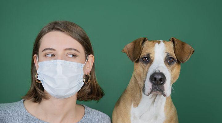 Coronavirus et animaux : quels risques ?