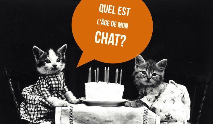 Calculer L Age Du Chat En Age Humain Correspondance Doctissimo