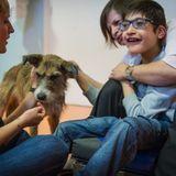 Médiation animale : la zoothérapie pour enfants handicapés