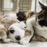 Le travail de la chatte et la naissance des chatons