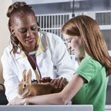 Les intoxications alimentaires du lapin