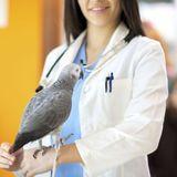 Santé des oiseaux