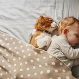 Développement du nourrisson et du chiot : quels sont les points communs ?