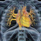La transplantation cellulaire en cardiologie, solution d'avenir pour l'insuffisance cardiaque ?