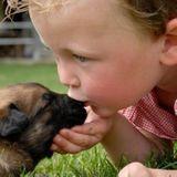 Les chiens protégeraient les bébés de certaines infections