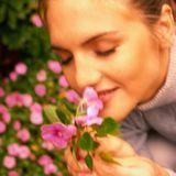 Les plantes : les racines de la santé