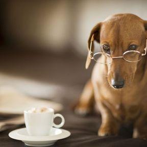Le café ou le thé