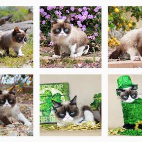 Tardar Sauce alias Grumpy Cat