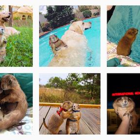 Bing et Swarley les chiens de prairie