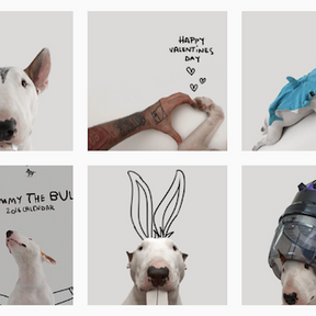 Jimmy le Bull-Terrier