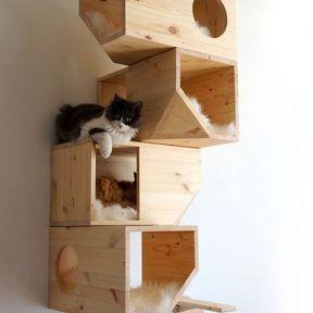 Arbre à chat box