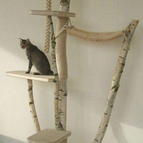 Arbre à chat branche