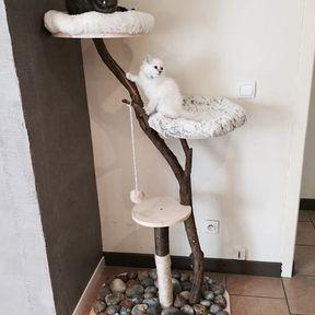 Arbre à chat branches