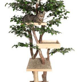 Arbre à chat feuilles