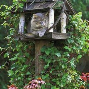 Arbre à chat jardin
