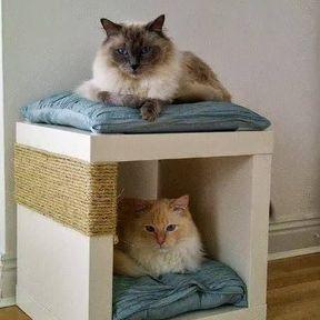 Arbre à chat meuble