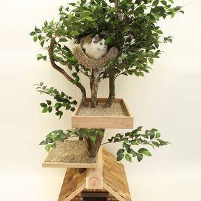 Arbre à chat nature