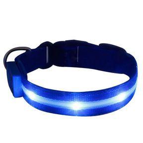 Un collier à LED pour chien