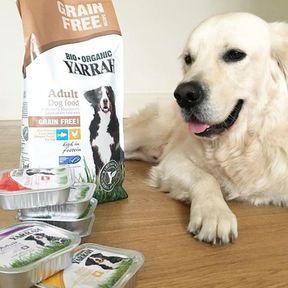 Une alimentation bio pour chiens et chats
