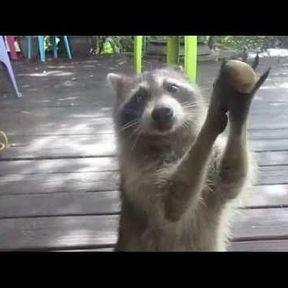 Je suis là ! Ouvrez-moi la porte !