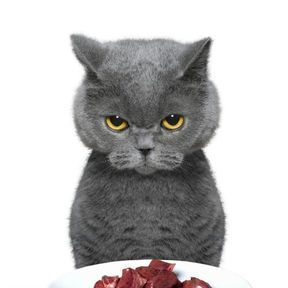 Hachis de boeuf au persil (chat)