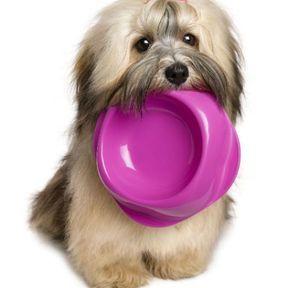 Kiri® et purée de poireau (chien)