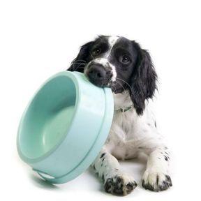Thon et jardinière de légumes (chien)