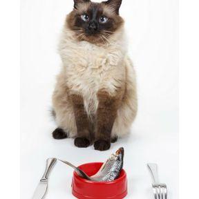 Thon persillé au maïs (chat)