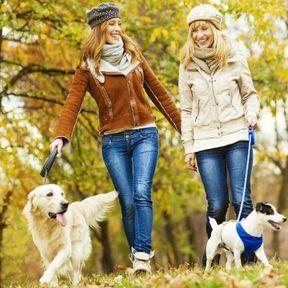 La cani-marche