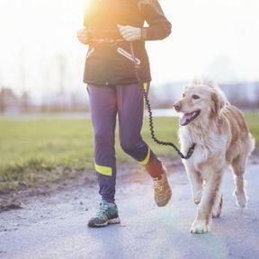 La cani-course