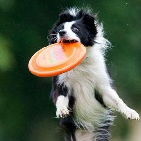 Le discdog