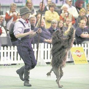 Le dog dancing (ou Obé-rythmée)