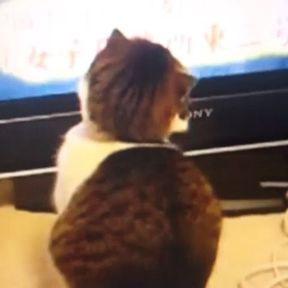 Amouuuur, chat et beauté !