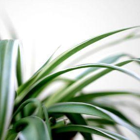 On dépollue par les plantes