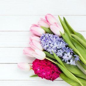 Fleurs à bulbes